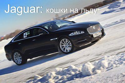 Jaguar: кошки на льду