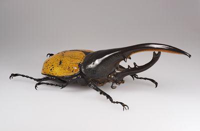 Vw new beetle следующего поколения засветился в альпах